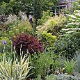 Bloomtown_front_garden_4816_blog