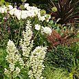 Bloomtown_front_garden_9706_blog