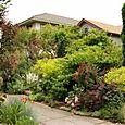 Bloomtown_front_garden_9682_blog