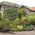 Bloomtown_front_garden_4718_blog