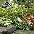 Bloomtown_front_garden_4700_blog