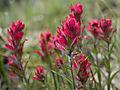 wildflower_9577
