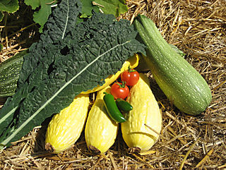 Vegetable Garden Harvest Early August