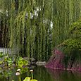 Portland Classical Chinese Garden_12