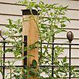 Bloomtown Kitchen Garden_trellis detail_9937