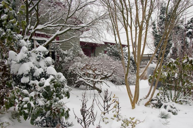 Bloomtown under Snow Dec 08_05