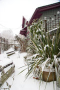 Bloomtown under Snow Dec 08_02