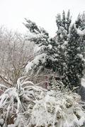 Bloomtown under Snow Dec 08_04