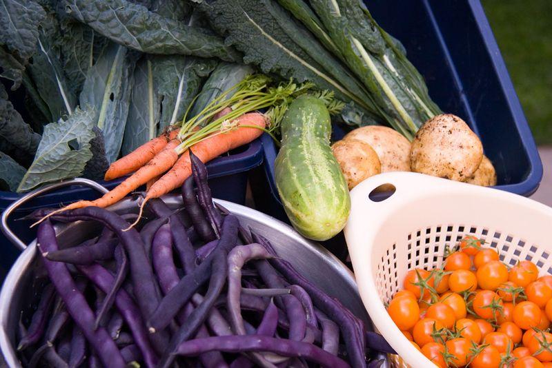 Harvest_0093