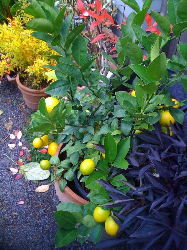 Bloomtown Kitchen Garden_1