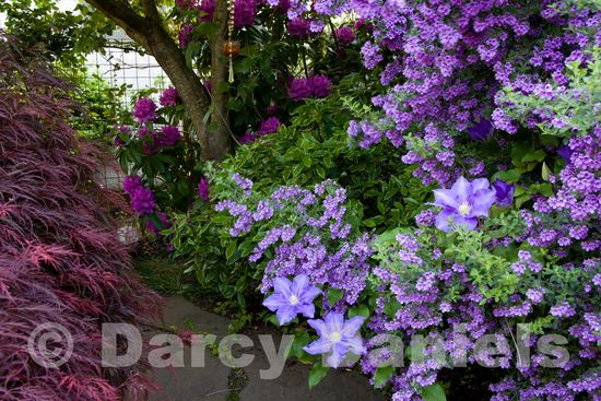Monochromatic Purple Planting Scheme-2271