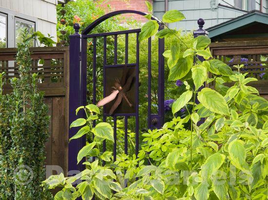 Client back yard garden-9158