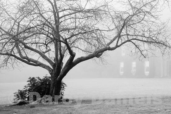 Misty Morning at Elk Rock-24