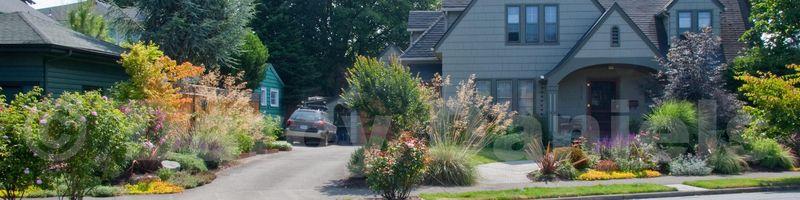 Front Yard Veggies FG 2011-7562