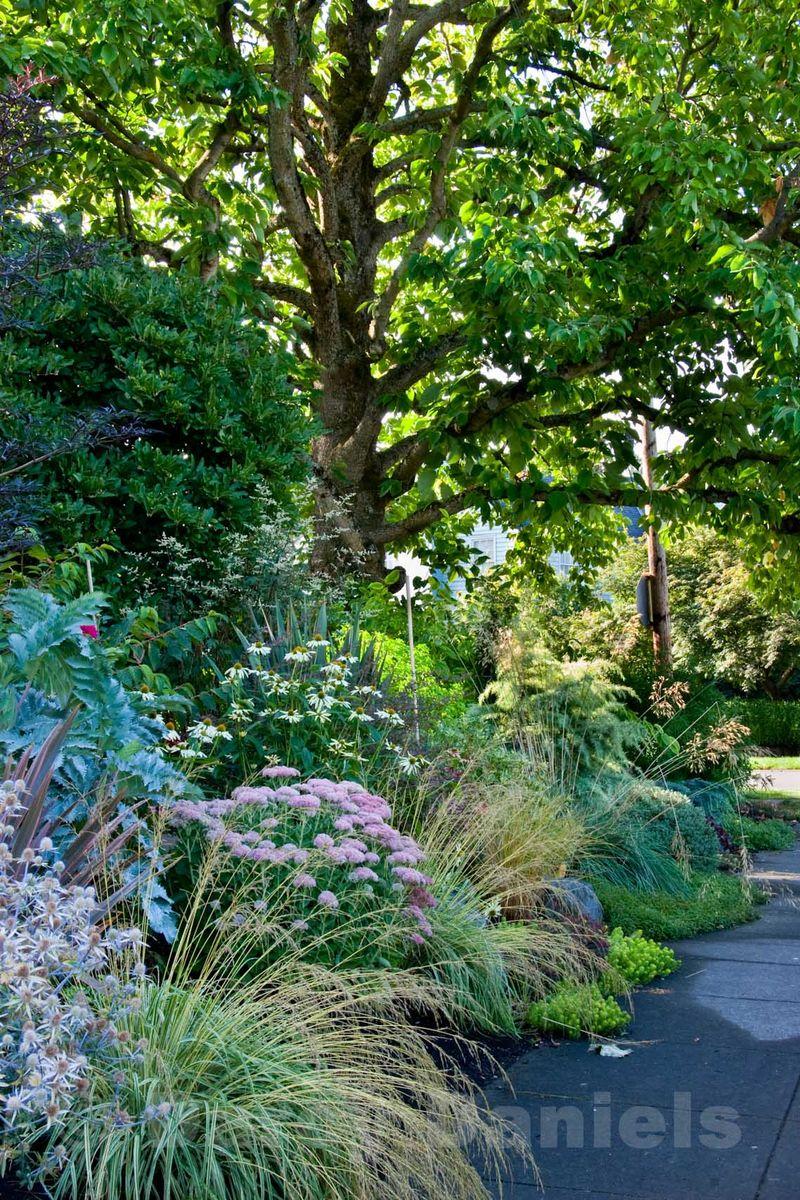 Client front yard garden-4882