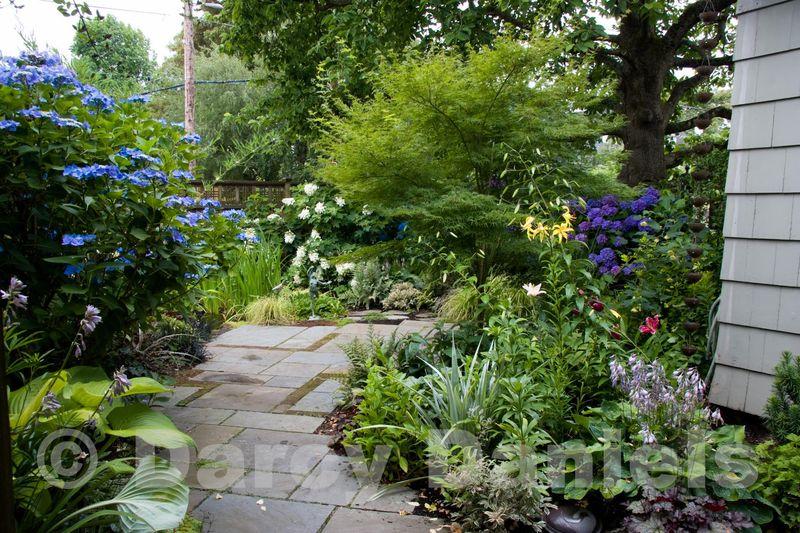 Client back yard garden-9103