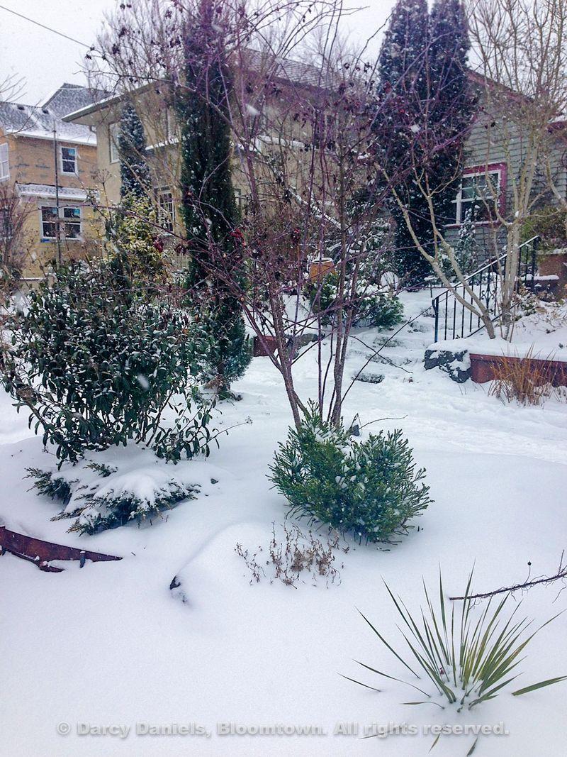 Snow-Feb-2014-2668