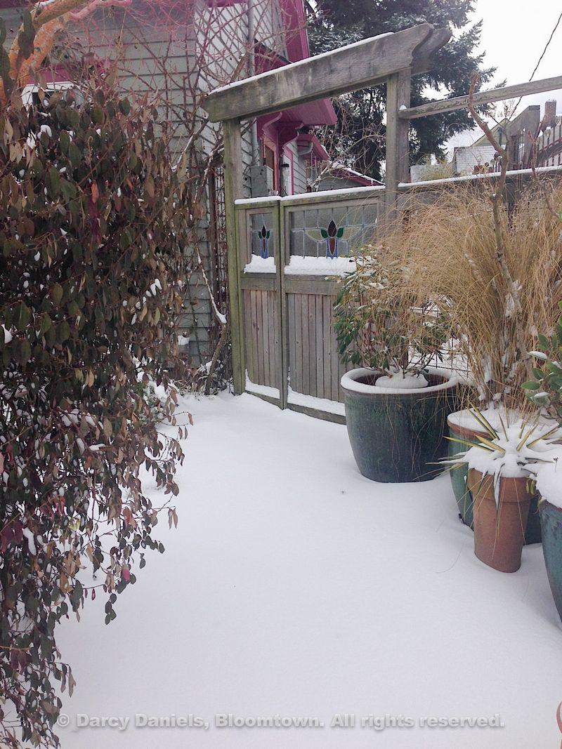 Snow-Feb-2014-2649
