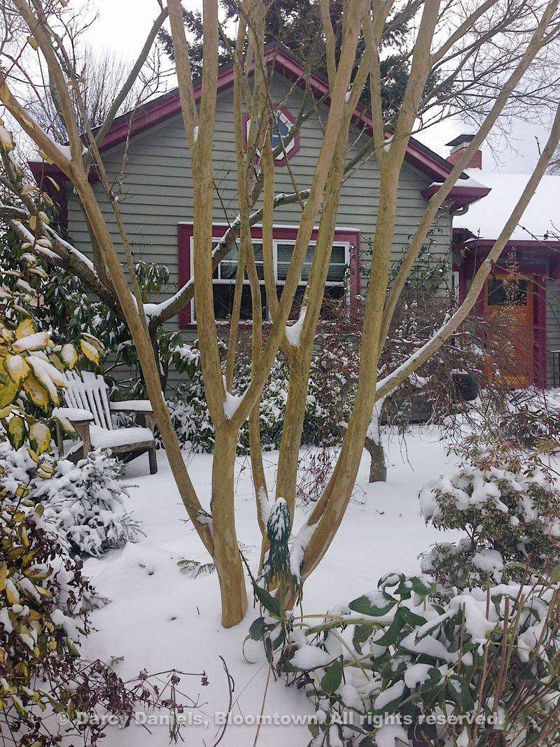 Snow-Feb-2014-2651