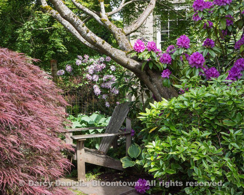 Bloomtown Front Garden Spring 2014-05903