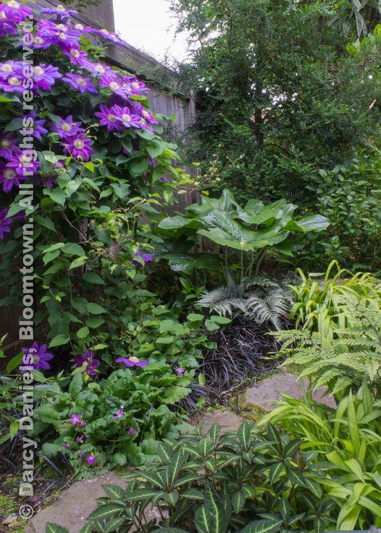 Bloomtown Back Garden-05951