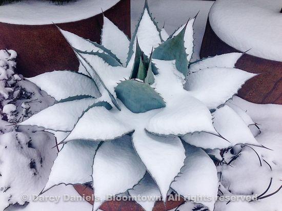 Snow-Feb-2014-2659