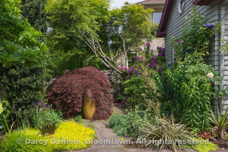 Bloomtown Front Garden Spring 2014-05902
