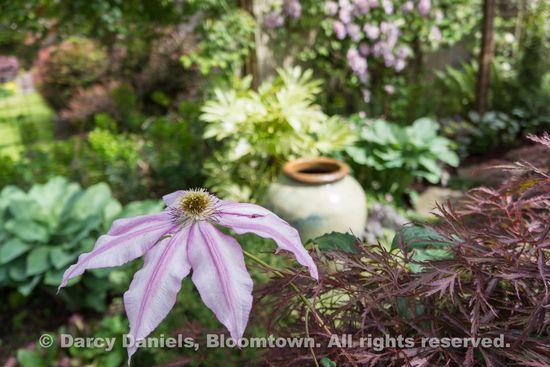 Bloomtown Front Garden Spring 2014-05901