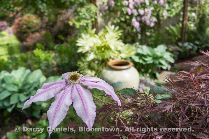 Bloomtown Front Garden Spring 2014-05912