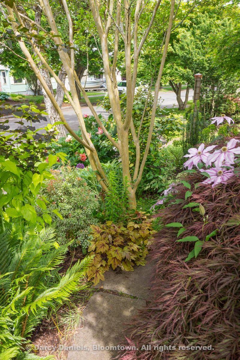 Bloomtown Front Garden Spring 2014-05914