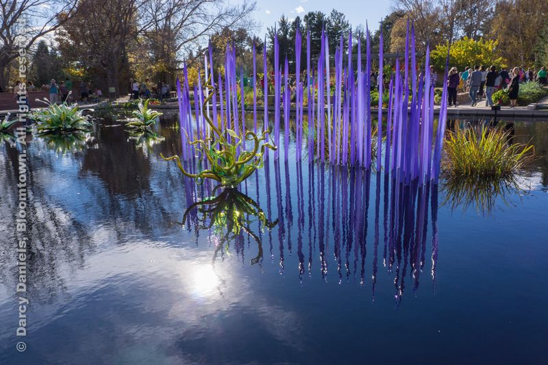 Chihuly-DBA-00944