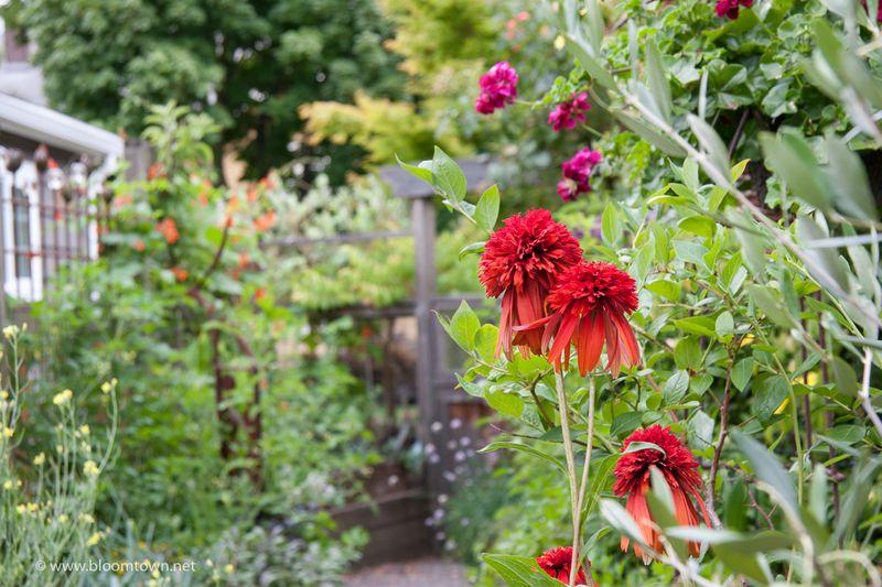 Planting Combination-1249