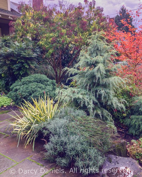 Fall Visit To A Client's Front Yard Garden