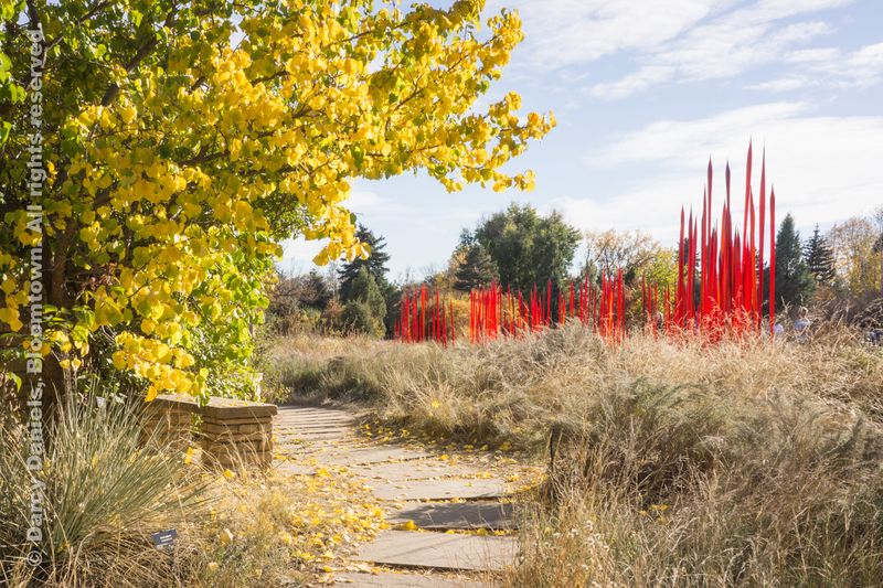 Chihuly-DBA-00951