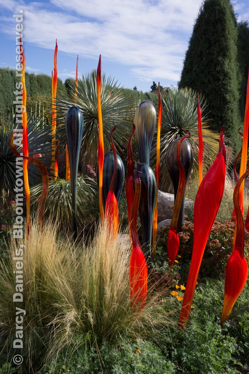 Chihuly-DBA-00904