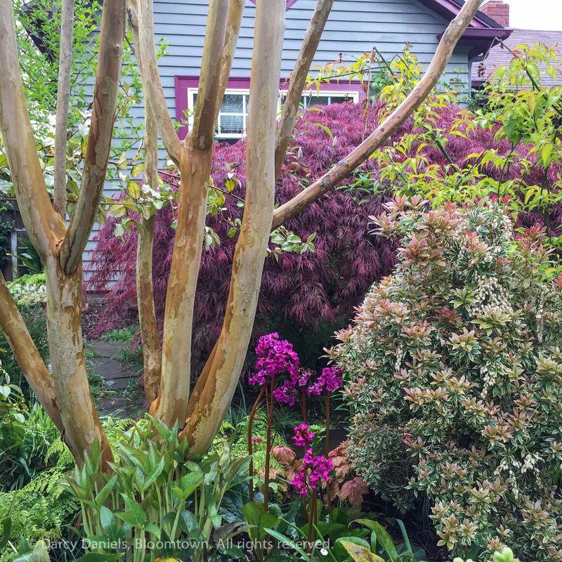 Planting Combination-9330