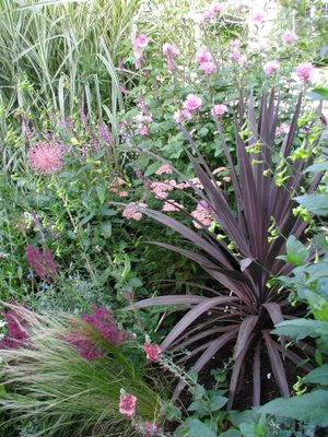 Combo_cordyline_blog