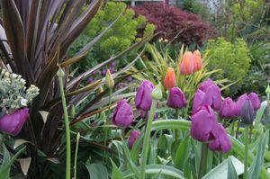 Tulips_4465_blog