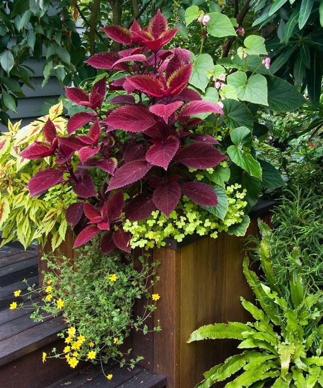 Photos my garden img 0427 for My gardener landscaping